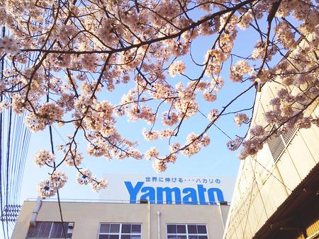 Yamato桜2