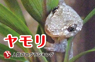 ninkiyamori