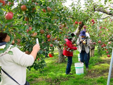 りんご狩り01