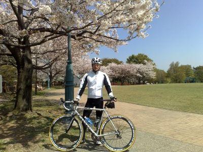 ロードバイクツーリング桜、根岸、本牧 (1)s