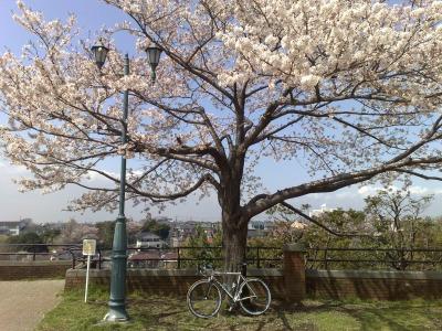 自転車でお花見 (3)