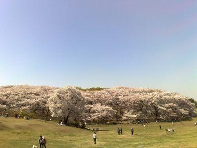 ロードバイクツーリング桜、根岸、本牧 (4)s