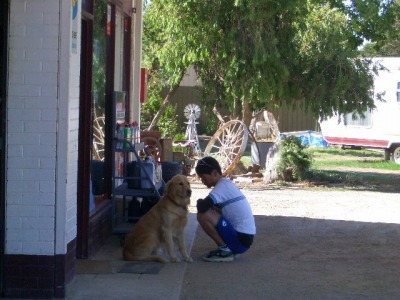 オーストラリアの犬