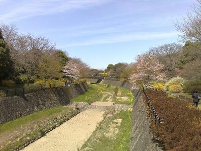 昭和記念公園花見1