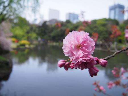 「上の池」の関山(カンザン)