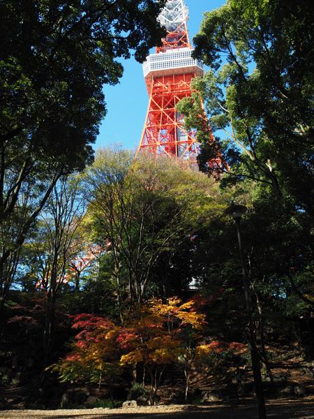 もみじ谷エリアから見上げる東京タワー