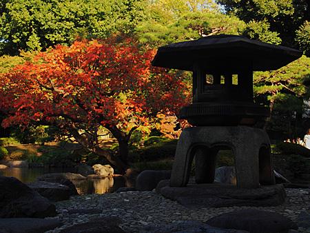 日本庭園の雪見灯籠とハゼノキ
