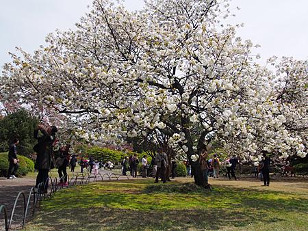 日本庭園の琴平(コトヒラ)