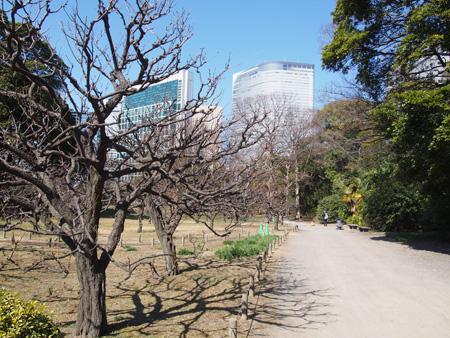 梅林はまだ枯れ木が多い