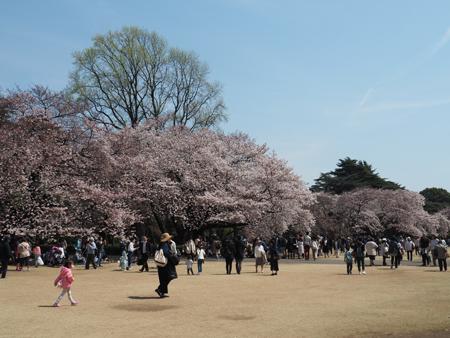 新宿御苑のお花見風景