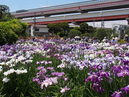 堀切菖蒲園