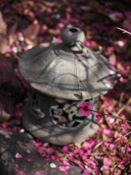 香取神社 香梅園の梅と銅灯籠?