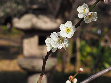 梅と石灯籠