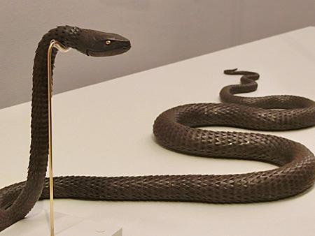 自在 ヘビ
