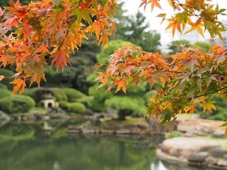 モミジと庭園の池