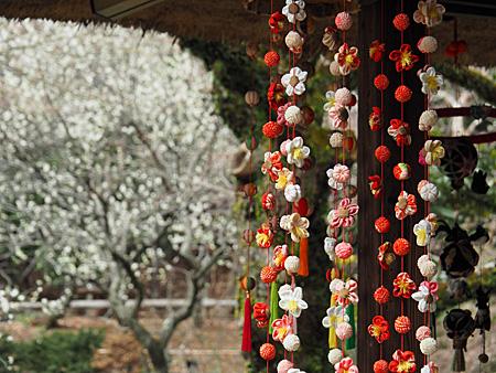 つるし雛と梅の木