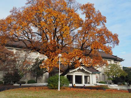 本館とゆりの木
