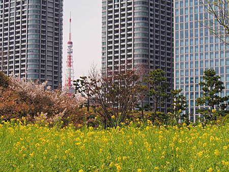 菜の花東京タワー