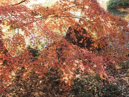 下の池の紅葉