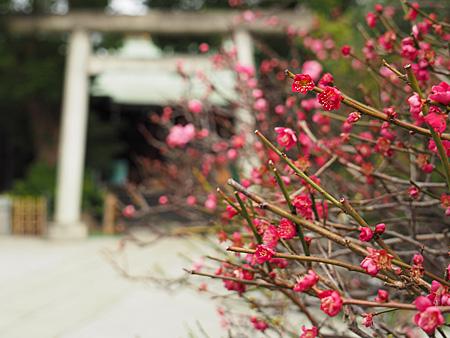 小村井香取神社の梅と社殿