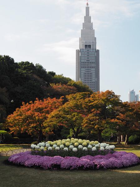 菊と紅葉とドコモビル