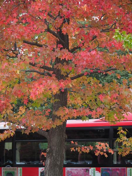 駐車場の一足早い紅葉