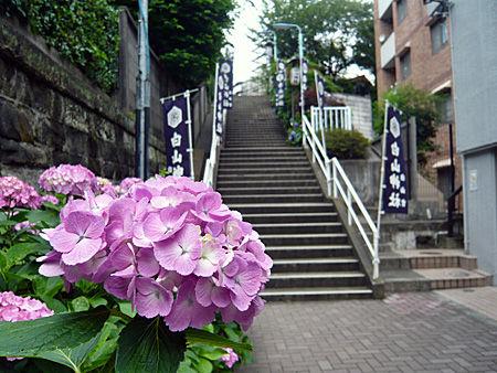 白山神社階段前