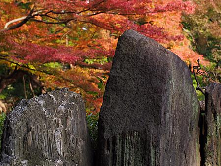 岩とモミジ
