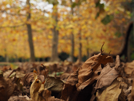 落ち葉が晩秋を感じさせる