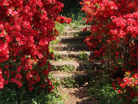 ツツジと階段