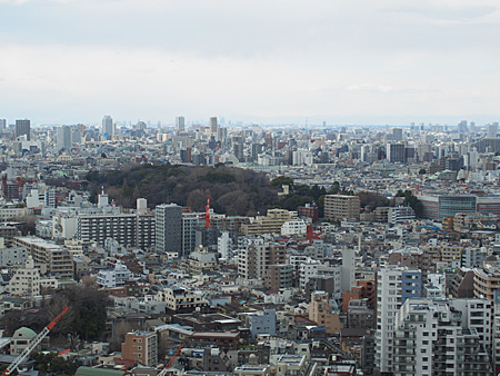 小石川植物園の森が見える。