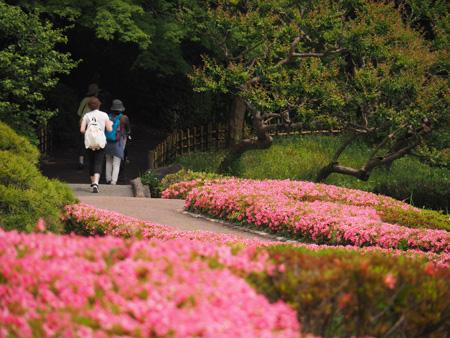 皇居二の丸庭園のサツキ