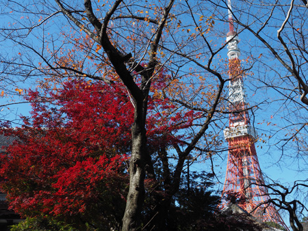 増上寺のモミジと東京タワー