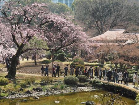 枝垂れ桜と石橋