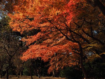 もみじ山の紅葉