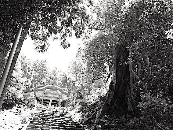 180730津野神社2