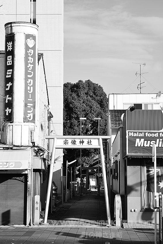 141130西区上名古屋宗像神社クスノキ3
