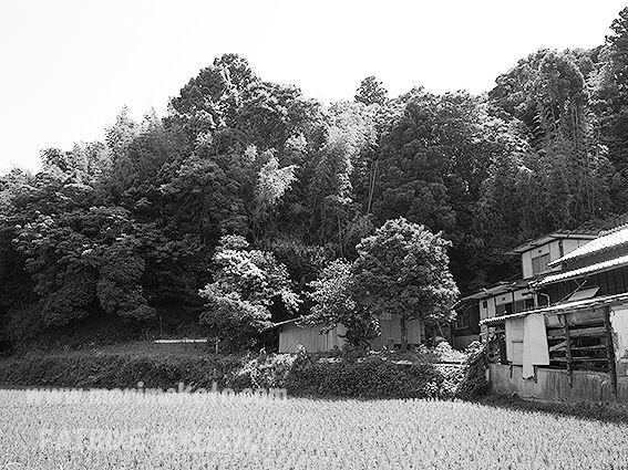 190606門江神社旧社地2