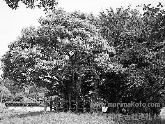 190530志保美神社3