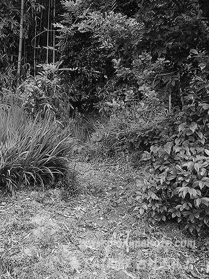 190606門江神社旧社地3