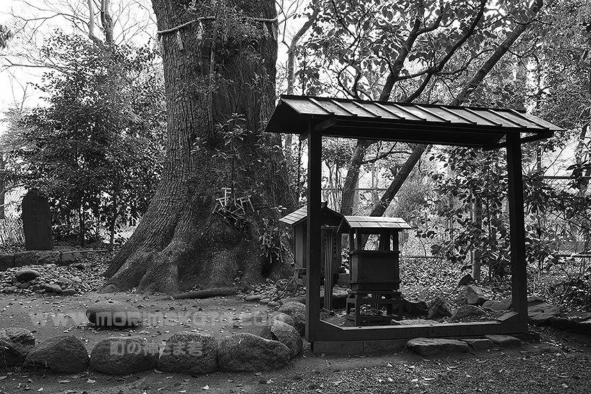 140413熱田区高蔵結御子神社1