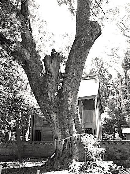 180730長寸神社4