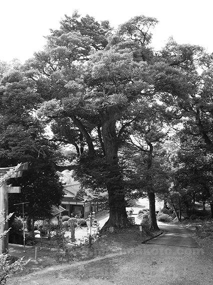 170401織田神社(佐田)5