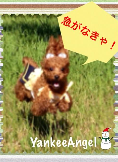 09a512fc.jpg