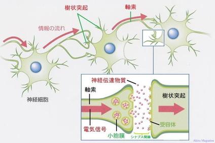 neuron_synapse001-1