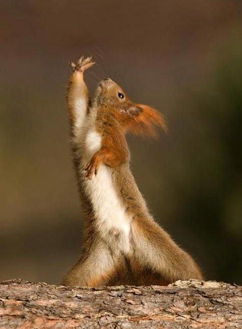squirrel5