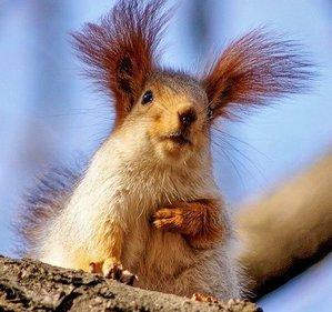 squirrel3r