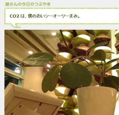 世界初 植物が書いてるブログ「今日の緑さん」