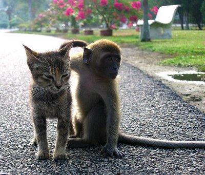 monkeykitten