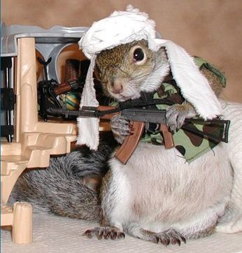 talibansquirrel